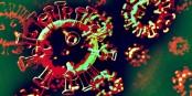 Welche Farbe hat das Virus?  Wärmebildkamera zeigt deutliche Hitzeausschläge auf der Kruste. Foto: HFCM Communicatie / CC-BY-SA 4.0int